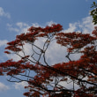 中島公園の紅葉