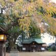 「枝垂れる秋色」 いわき 三島八幡にて撮影! 紅枝垂桜の紅葉