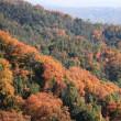 晩秋の遙照山