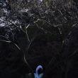 色づく舞岡公園
