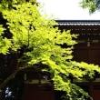 松戸 本土寺へ♪