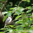 巣立ち雛 3種の野鳥