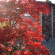 薪棚と紅葉