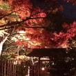白鳥庭園・夜の露地