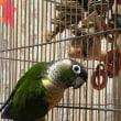 可愛らしい鳥(ひと)