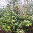 マイカー・家の屋根のチリ・ホコリ雨で一掃か・・・ブログ更新しました!