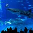 SHOW TIME 美ら海水族館