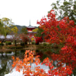 2017 京都の紅葉 大覚寺