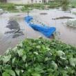 台風による家庭菜園 全面水没して全滅・・・