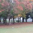 ■小雨の公園