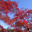 神明社・多聞院・多福寺の紅葉 2017
