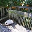 庭風景と、食事関連でご質問におこたえしてと。あとは熊本の地名について