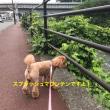 第3回マンツーワン!旅行(コレドール湯河原 後編)