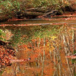 川面にも紅葉が。。。