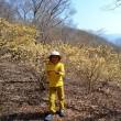 チビ登山第79座 ミツマタ咲き乱れるミツバ岳へ