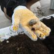 カブトムシ幼虫のマット交換