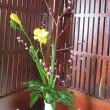 今月の教室の花・・・・