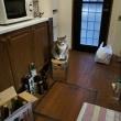 写真「今朝の猫」
