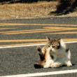 10年前の瀬会の駐車場の猫