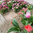小さな春♪