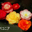 神代植物公園の花