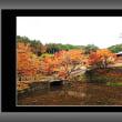 丹波・圓通寺の紅葉