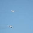 残り写真~米海兵隊岩国航空基地(2017年)49