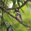 幼鳥の季節 10