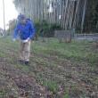 小麦畑に肥料をまく