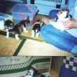 子猫時代の写真