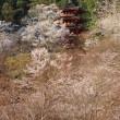 ぶらり旅・長谷寺④本堂<1>(奈良県桜井市)