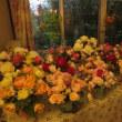 明日を待つ花