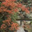 紅葉&黄葉~宮島(廿日市市)