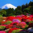 日本五月の美景(富士山とつつじ)