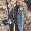 初物ゲット 鮭釣り2017
