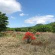 初夏の榛名山