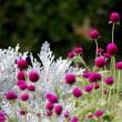 愛・地球博記念公園の夏を彩る花たち