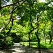 真夏の太陽が燦々と降り注ぐ小石川後楽園 其の4
