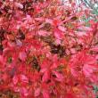 まだ、紅葉真っ盛り