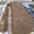 ブロッコリー栽培2017年秋、畝作りから植付、防虫対策