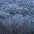 寒いけど雪景色は最高