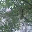 梅雨は鬱陶しいわ(;O;)