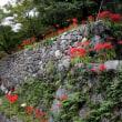 「虚空蔵さん」で知られる「明星輪寺」の彼岸花を