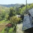 若葉燃ゆ!・・・山の自宅の周りは、淡い芽吹きの清々しい新緑が眩しい!このままの状態で秋まで行けば良いんだけどね・・・