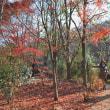 三芳町 石坂産業が運営しているクヌギの森にに行ってきました。