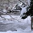 今朝も寒かった・・・道庁の池も凍っています