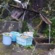 湯の山温泉湯治場まつり