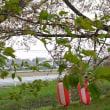 篠津・川辺桜祭り