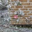 11月21日に初雪~~~