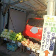 「吾妻山公園」で富士山と相模湾と菜の花の絶景